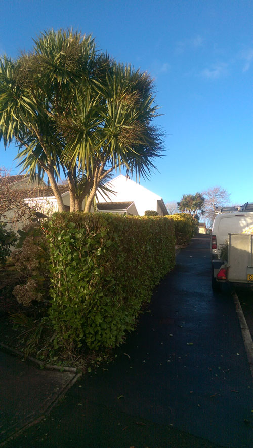 Hedge cutting in Liskeard